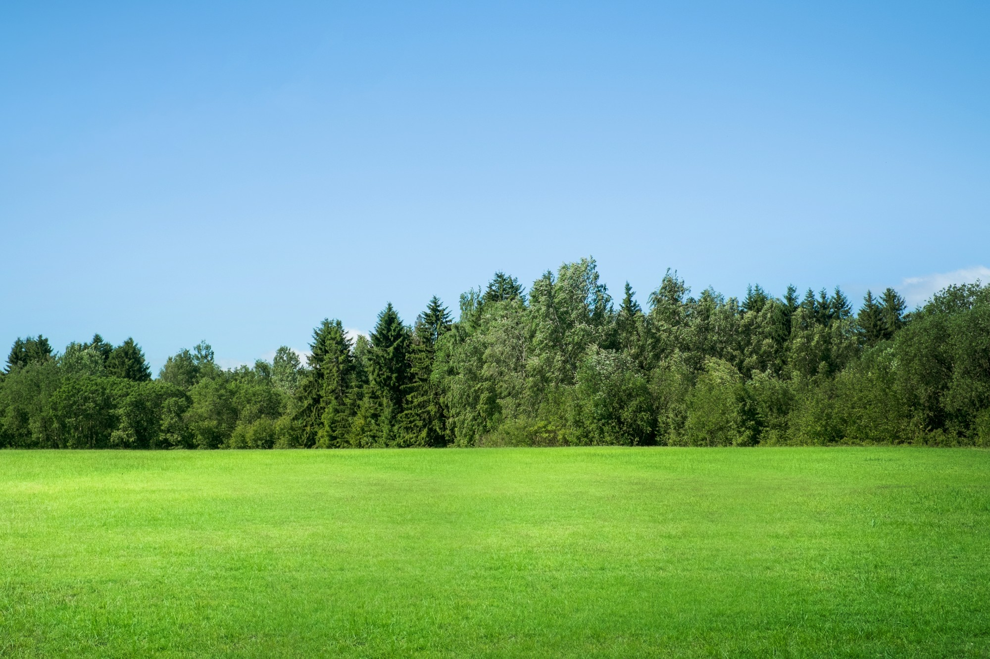 Green Field with Green Trees and Blue Sky